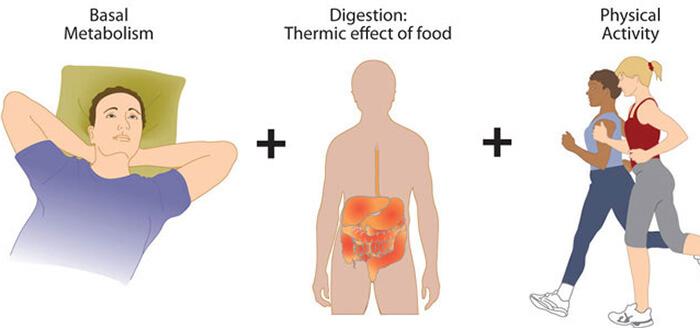 Equilibre Metabolisme