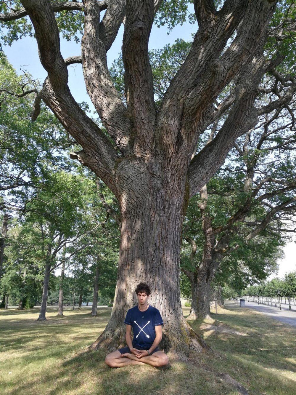 Meditation sous arbre à Stockholm